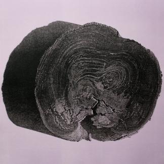 muokattu-lila-puu